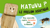 Katuvu : un frelon asiatique ?
